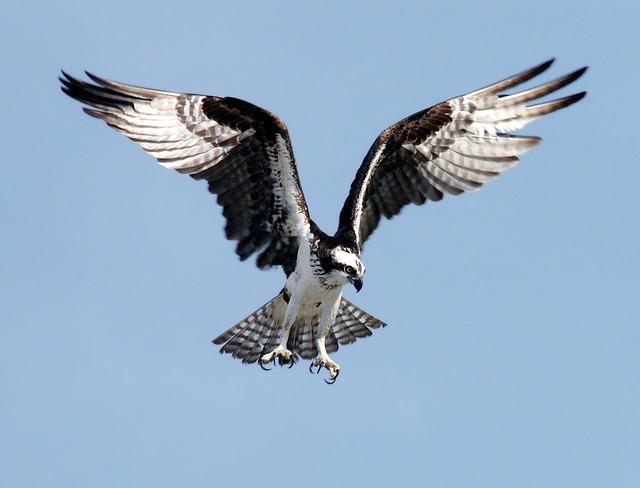 Bird Strike au Décollage
