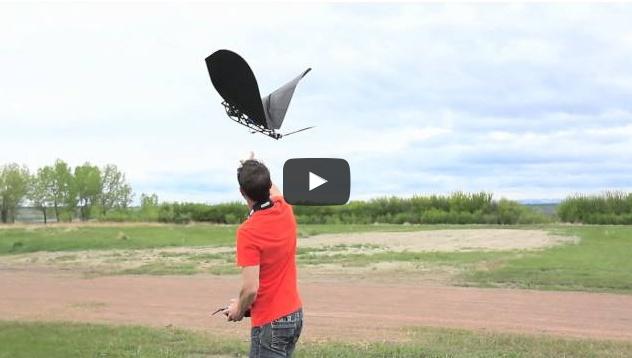 Aviation - Ornithoptère